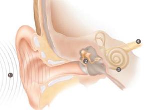 Partes de nuestro oido